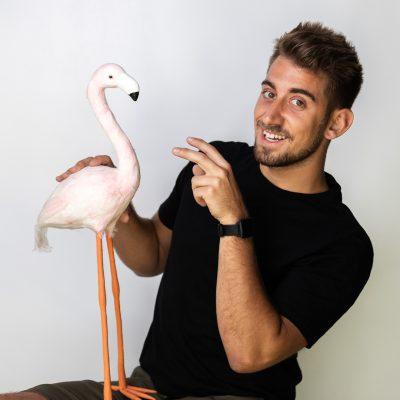 Anže-flamingo-2